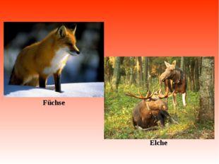 Füchse Elche