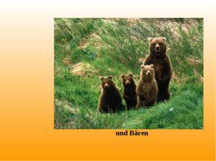 und Bären
