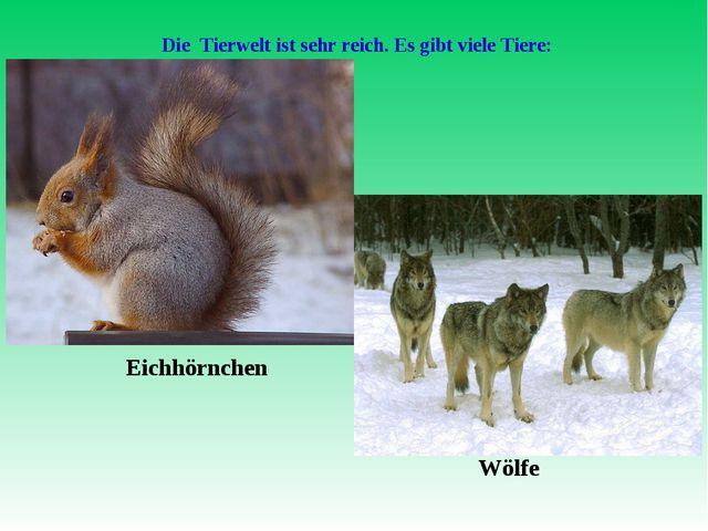 Die Tierwelt ist sehr reich. Es gibt viele Tiere: Eichhörnchen Wölfe