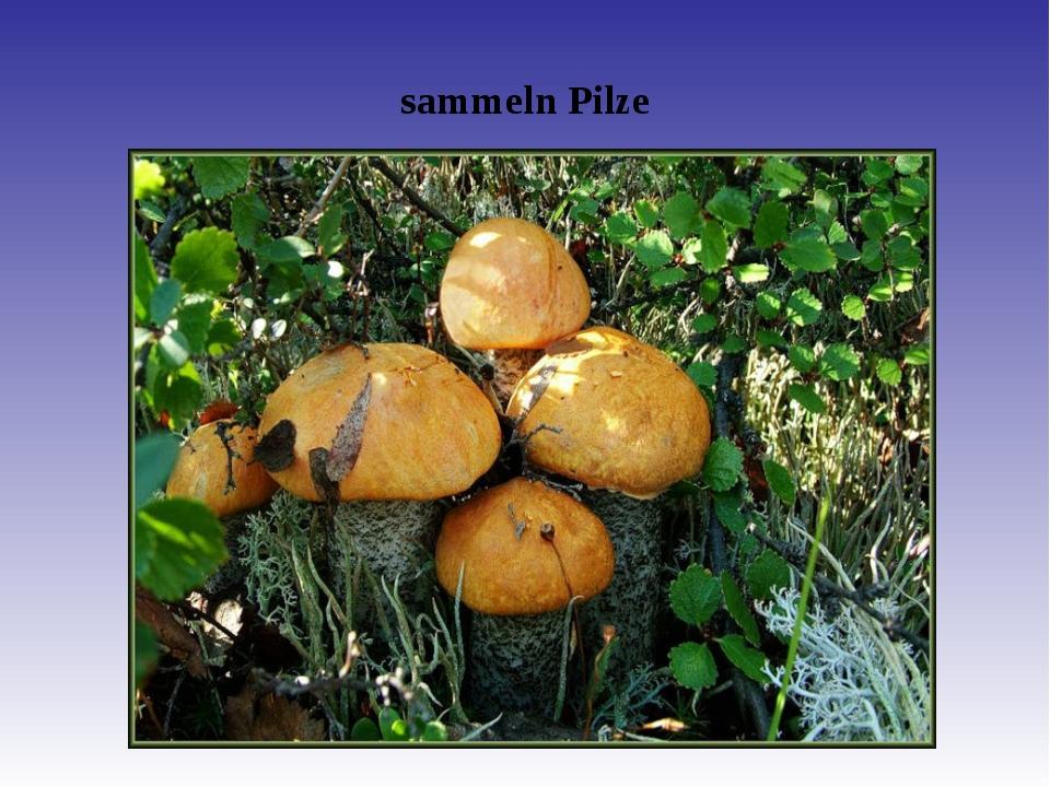 sammeln Pilze