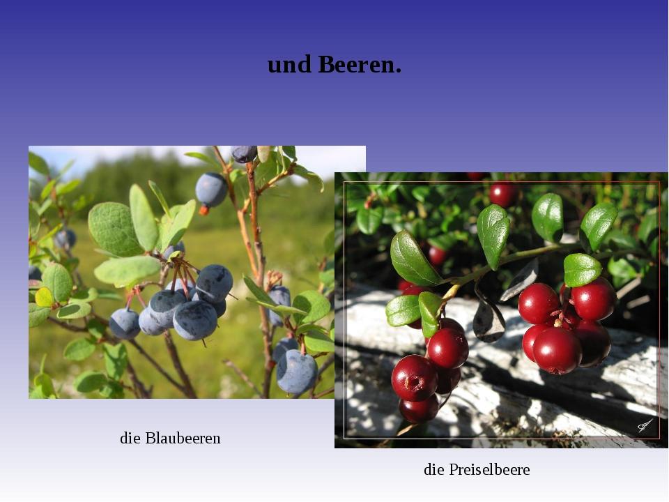 und Beeren. die Blaubeeren die Preiselbeere