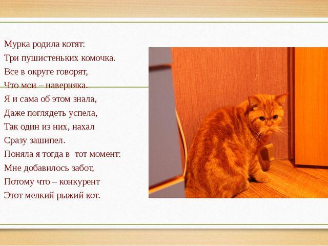 Мурка родила котят: Три пушистеньких комочка. Все в округе говорят, Что мои...