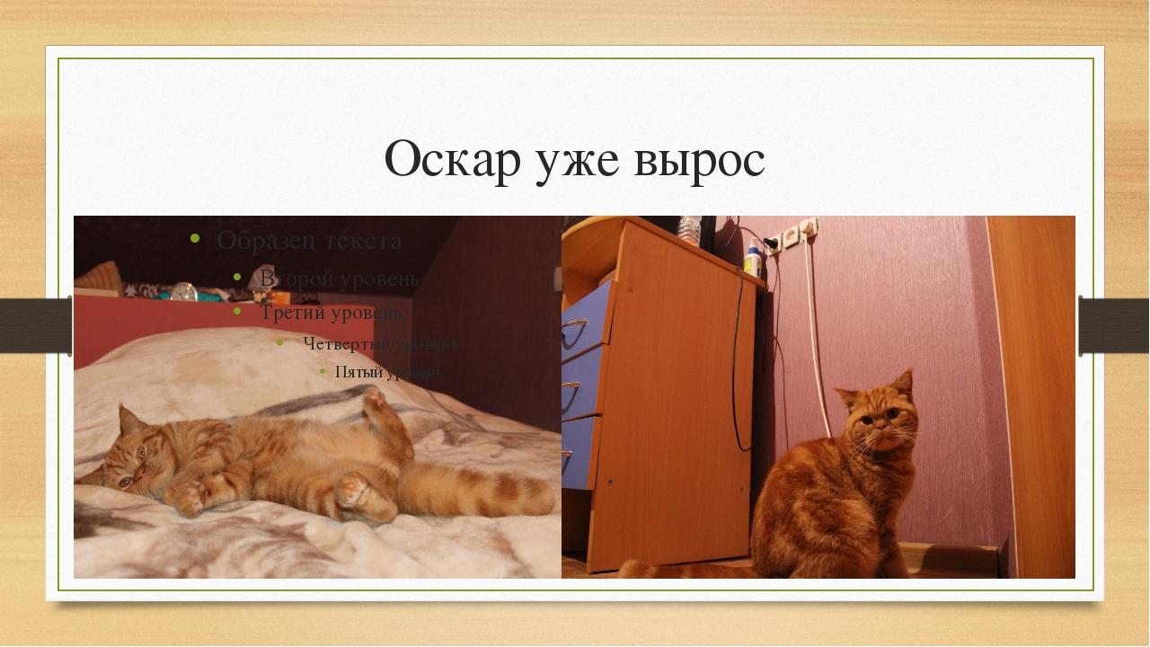Оскар уже вырос