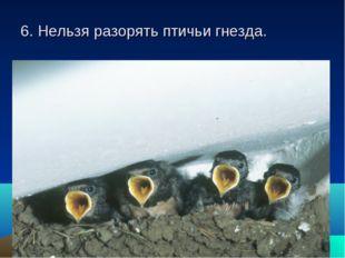 6. Нельзя разорять птичьи гнезда.