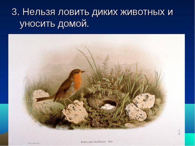 3. Нельзя ловить диких животных и уносить домой.