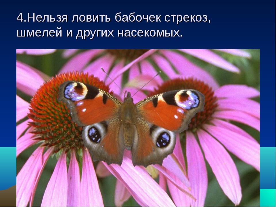 4.Нельзя ловить бабочек стрекоз, шмелей и других насекомых.