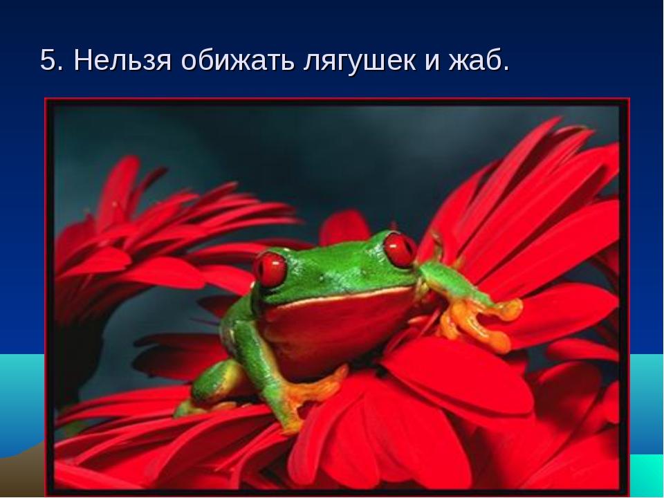5. Нельзя обижать лягушек и жаб.