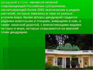 Дендрарий в Сочи - является зеленой сокровищницей Российских субтропиков, нас