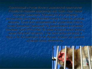Единственный в России Институт медицинской приматологии Российской Академии м