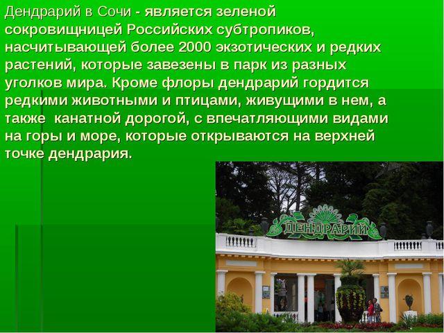 Дендрарий в Сочи - является зеленой сокровищницей Российских субтропиков, нас...