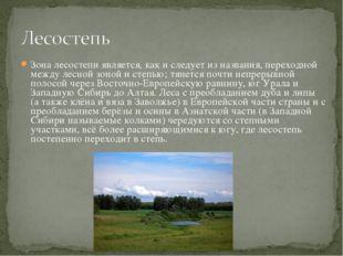Зона лесостепи является, как и следует из названия, переходной между лесной з
