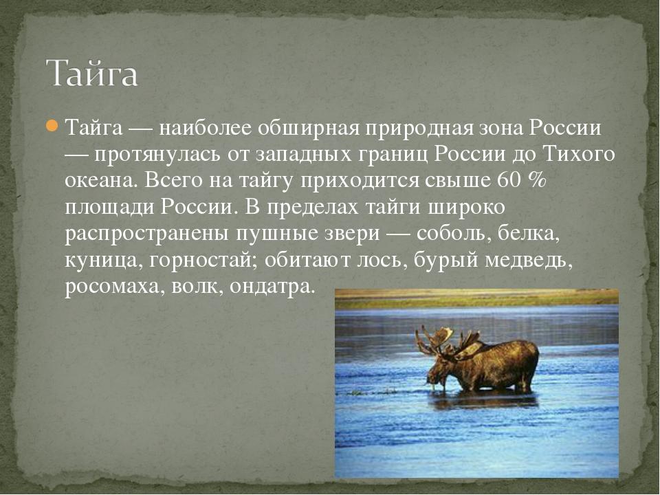 Тайга — наиболее обширная природная зона России — протянулась от западных гра...