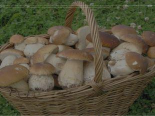 Первые грибы появились на нашей планете более миллиарда лет назад. На Земле н