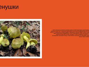 Зеленушки Гриб зеленушка достаточно распространен на всей территории нашей с