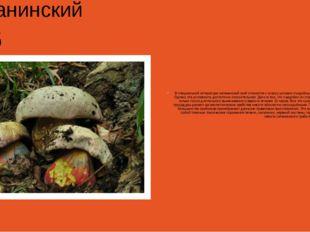 Сатанинский гриб В специальной литературе сатанинский гриб относится к класс