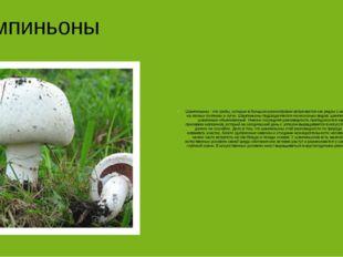 Шампиньоны Шампиньоны - это грибы, которые в большом разнообразии встречаютс