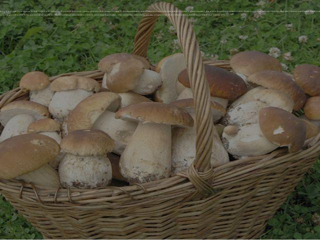 Первые грибы появились на нашей планете более миллиарда лет назад. На Земле н...
