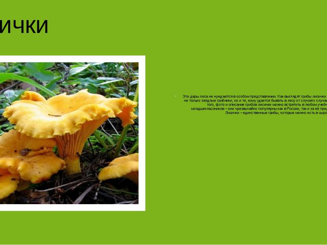Лисички Эти дары леса не нуждаются в особом представлении. Как выглядят гриб...