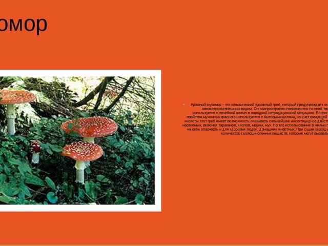 Мухомор Красный мухомор - это классический ядовитый гриб, который предупрежд...