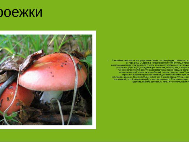Сыроежки Съедобные сыроежки - это традиционно виды, которые радуют грибников...