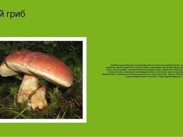 Белый гриб Шляпка подушковидная, полушаровидная или несколько распростертая,...