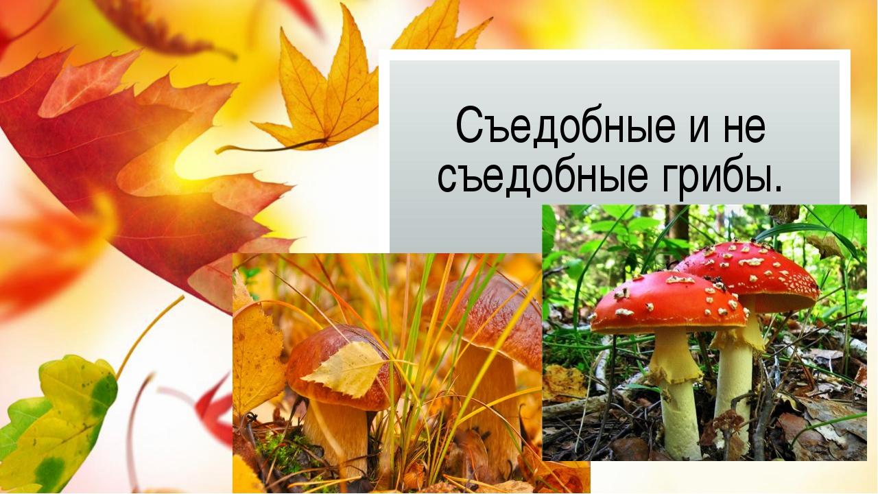 Съедобные и не съедобные грибы.