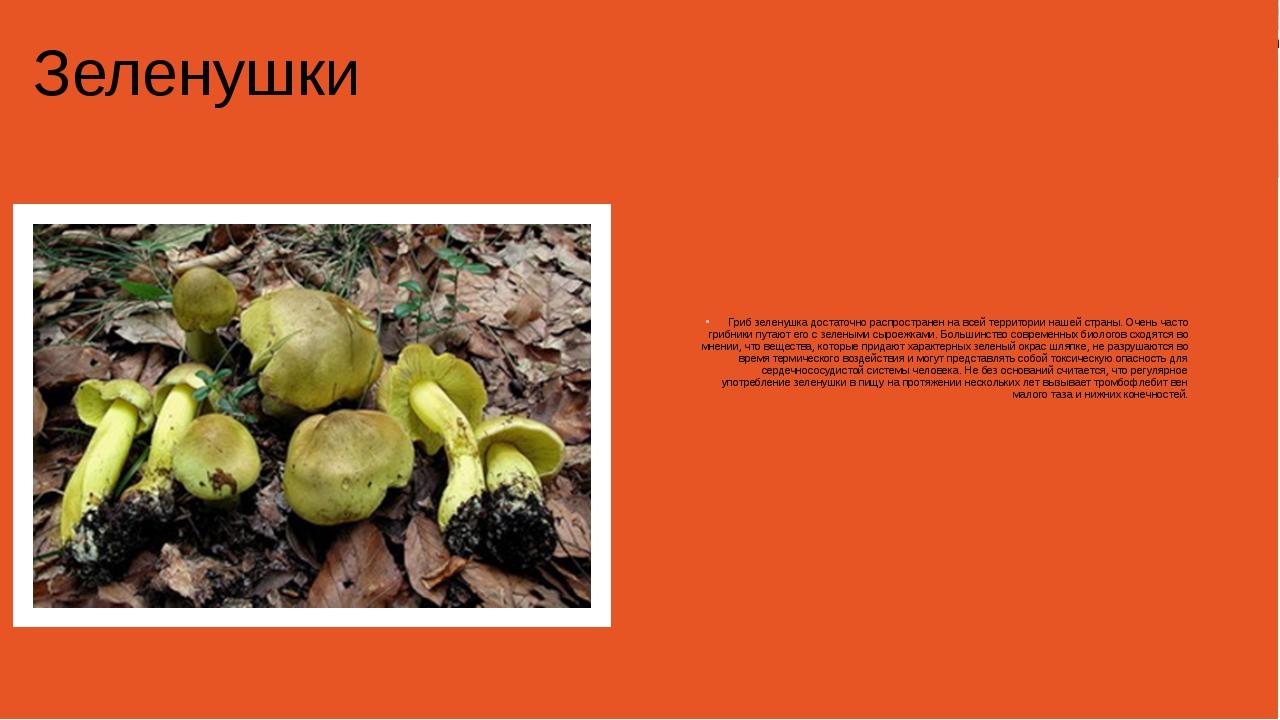 Зеленушки Гриб зеленушка достаточно распространен на всей территории нашей с...