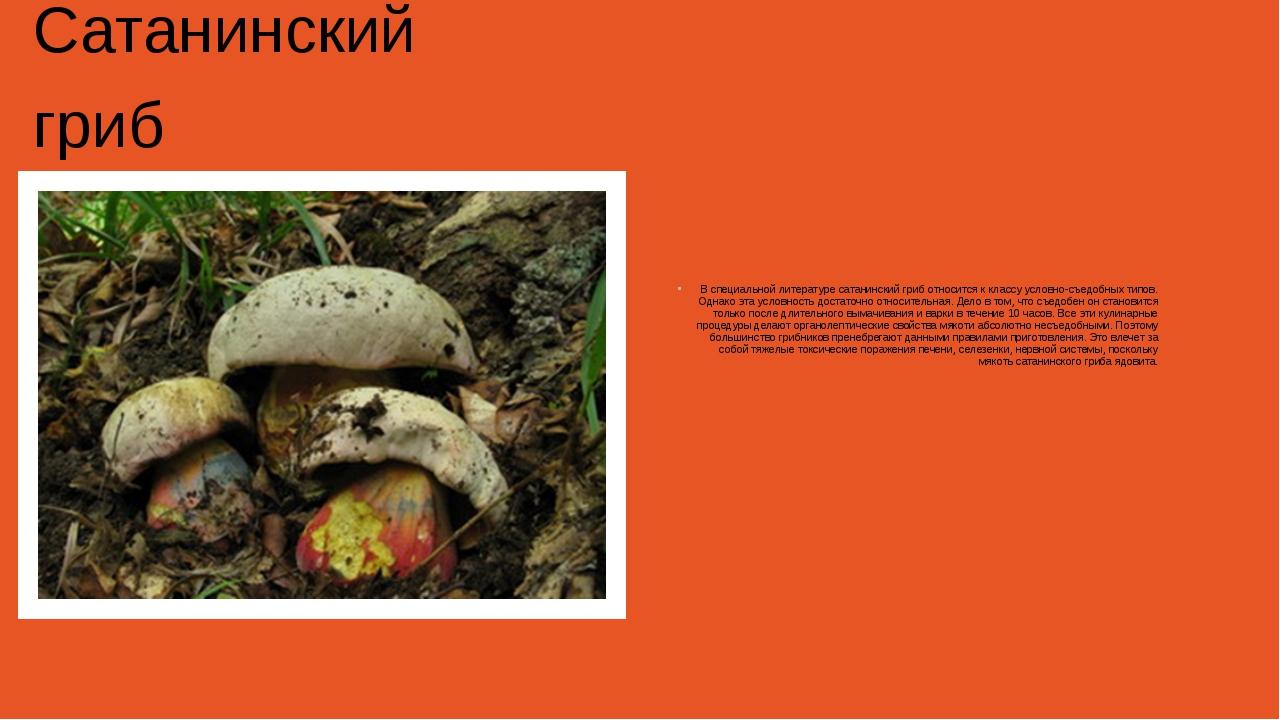 Сатанинский гриб В специальной литературе сатанинский гриб относится к класс...