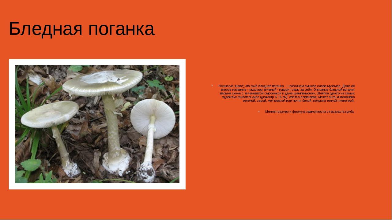 Бледная поганка Немногие знают, что гриб бледная поганка — в полном смысле с...