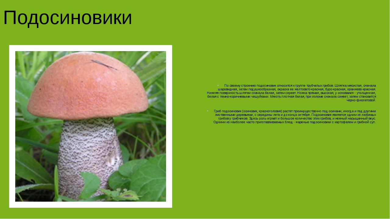 Подосиновики По своему строению подосиновик относится к группе трубчатых гри...