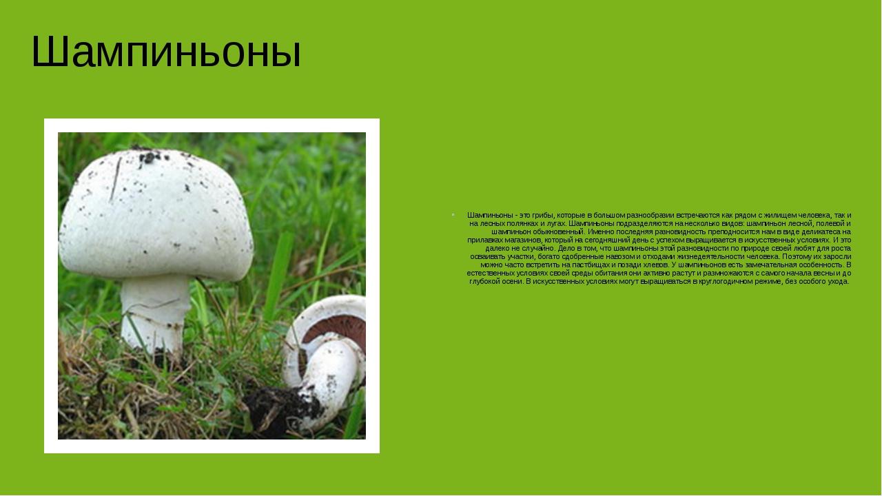 Шампиньоны Шампиньоны - это грибы, которые в большом разнообразии встречаютс...