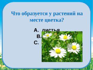 A. листья B. плод C. корень Что образуется у растений на месте цветка? Fokina