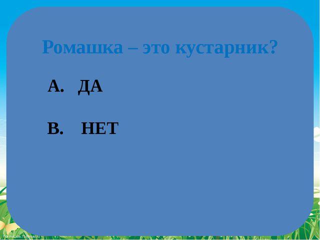 Ромашка – это кустарник? A. ДА B. НЕТ FokinaLida.75@mail.ru