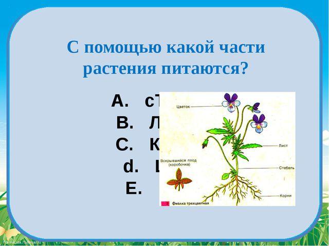 A. сТЕБЕЛЬ B. ЛИСТЬЯ C. КОРЕНЬ d. Цветок E. ПЛОД С помощью какой части растен...