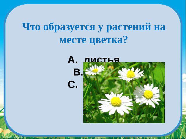 A. листья B. плод C. корень Что образуется у растений на месте цветка? Fokina...