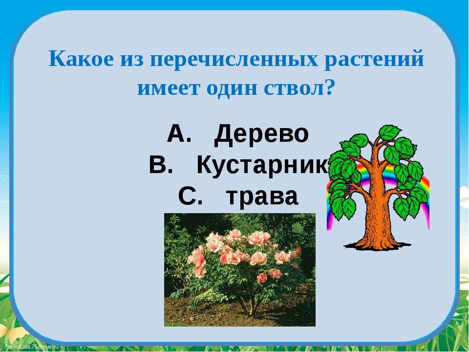 A. Дерево B. Кустарник C. трава Какое из перечисленных растений имеет один ст...