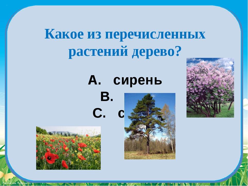 A. сирень B. мак C. сосна Какое из перечисленных растений дерево? FokinaLida....