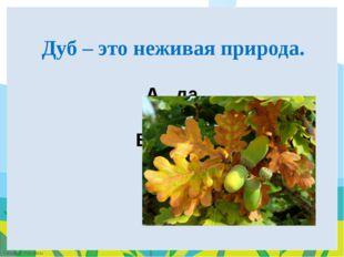 A. да B. НЕТ Дуб – это неживая природа. FokinaLida.75@mail.ru