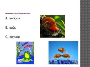 Какие живые существа очищают воду? А. молюски В. рыбы С. лягушки