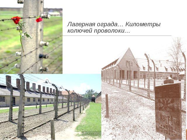 Лагерная ограда… Километры колючей проволоки…