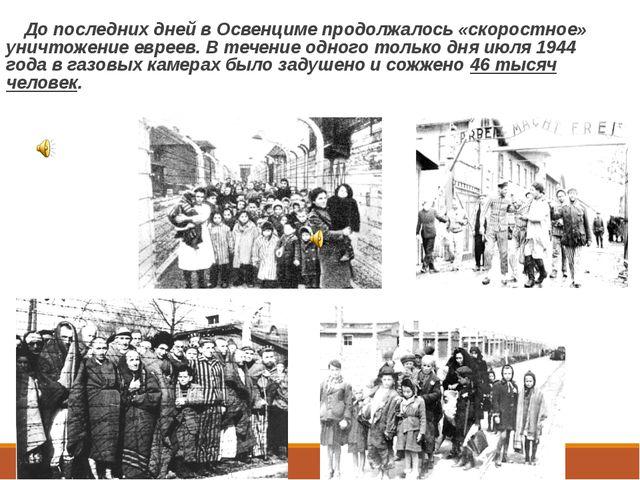 До последних дней в Освенциме продолжалось «скоростное» уничтожение евреев....