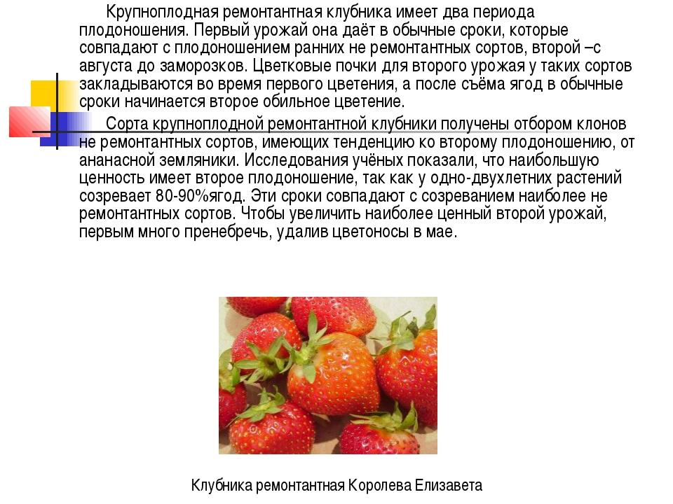 Крупноплодная ремонтантная клубника имеет два периода плодоношения. Первый ур...