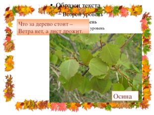 Что за дерево стоит – Ветра нет, а лист дрожит. Осина