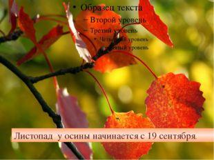 Листопад у осины начинается с 19 сентября.