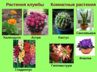 Растения клумбы Комнатные растения Кактус Астра Календула Сансевьера Гладиолу