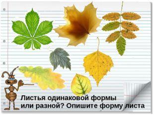 Листья одинаковой формы или разной? Опишите форму листа