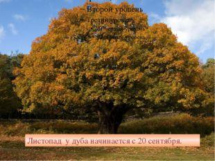 Листопад у дуба начинается с 20 сентября.