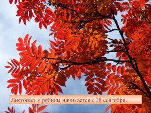 Листопад у рябины начинается с 18 сентября.
