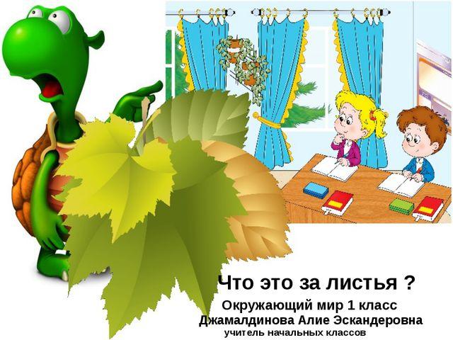 Что это за листья ? Окружающий мир 1 класс Джамалдинова Алие Эскандеровна учи...