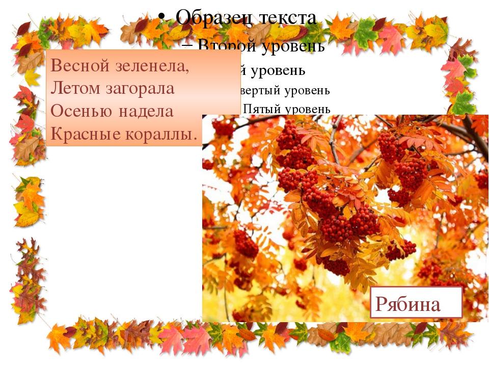 Весной зеленела, Летом загорала Осенью надела Красные кораллы. Рябина